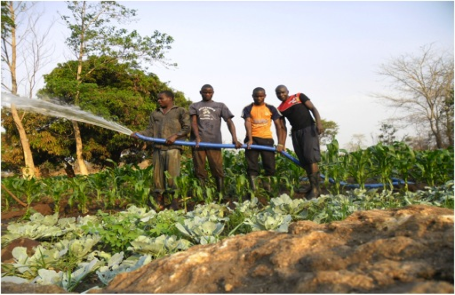 Young people watering crops at Pazesa
