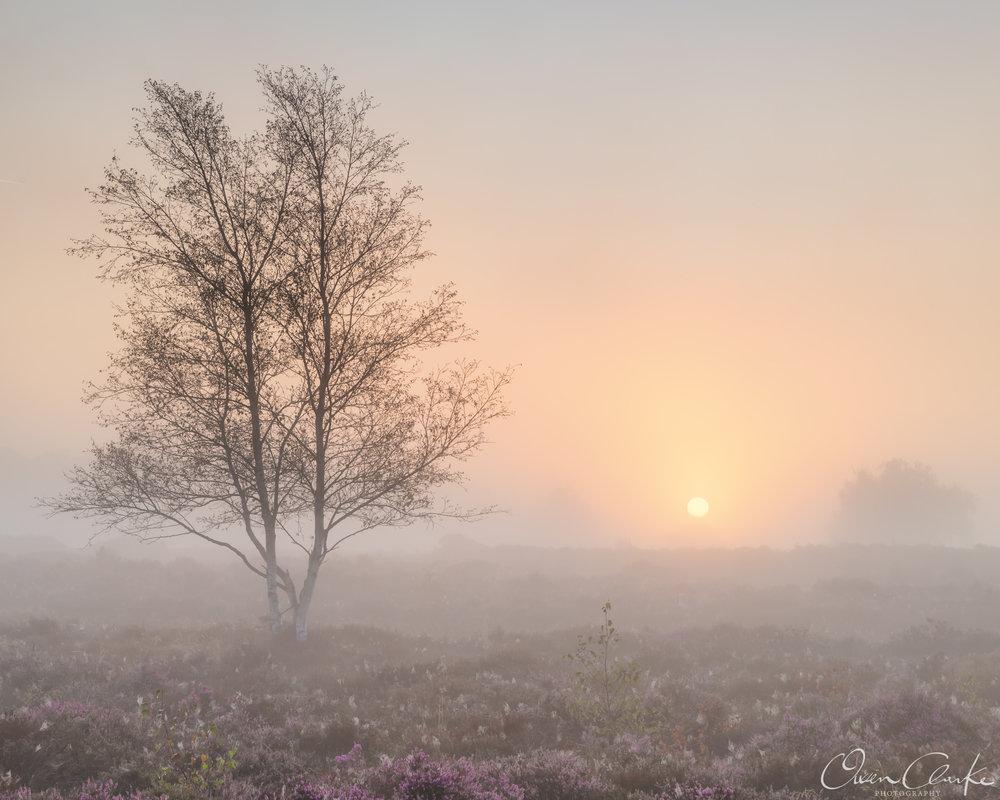 Westleton Mist