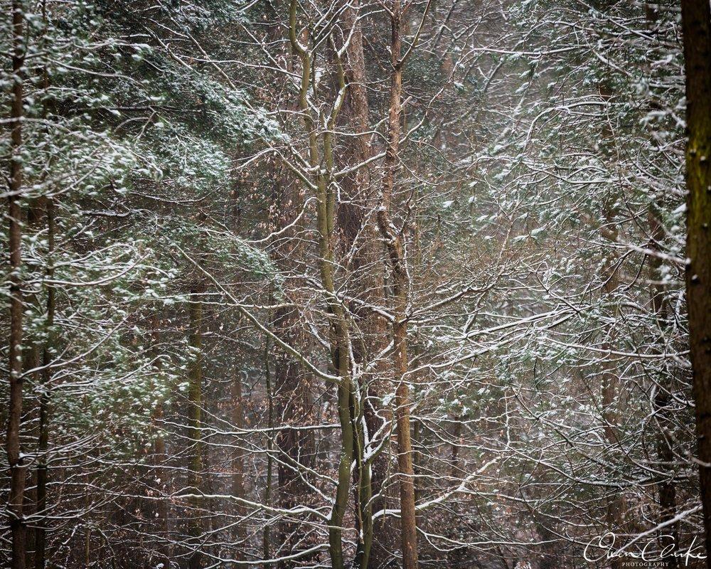 OCP Woodland-4.jpg