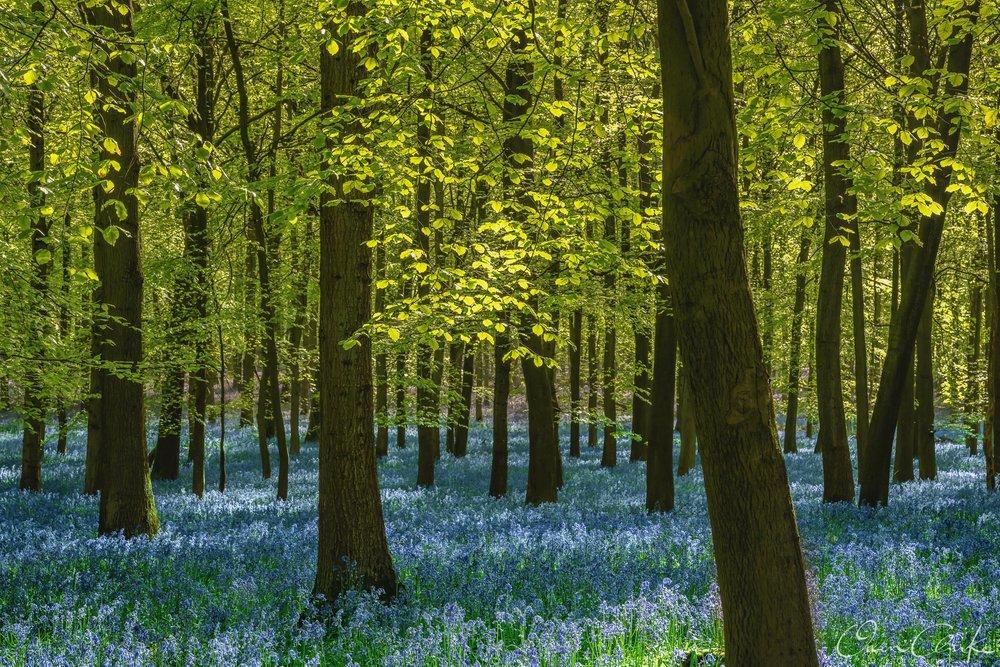 OCP Woodland-6.jpg