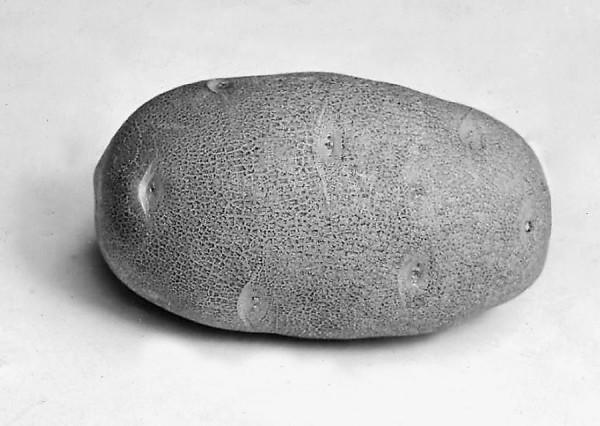 Idaho potato