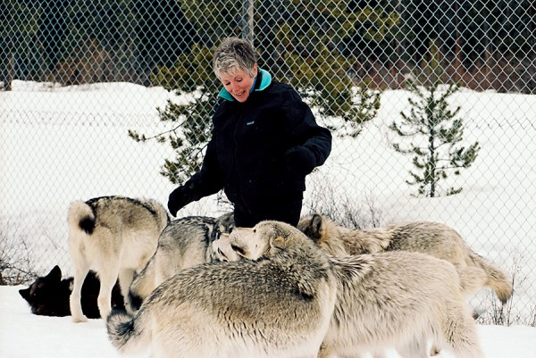 Sandy with wolf pack