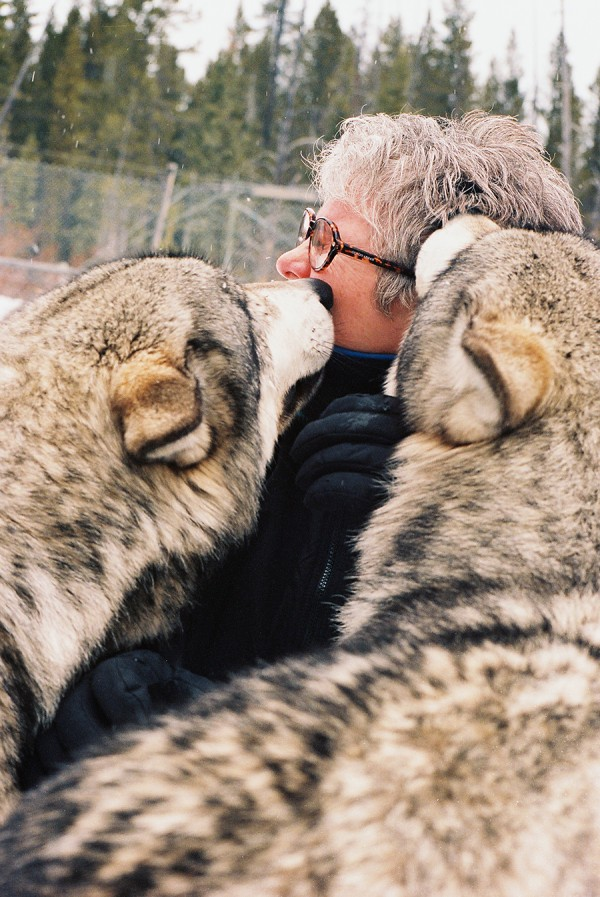 Sandy kissed by Sawtooth wolves