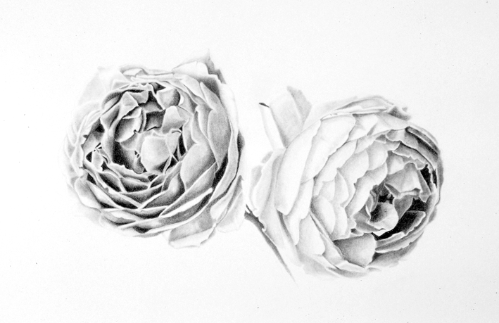 Two_Roses Drawing by Sandra Sallin