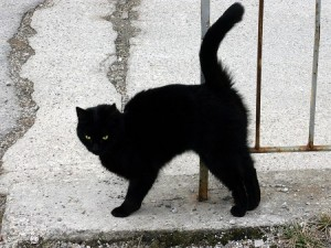 Black cat crossing my path