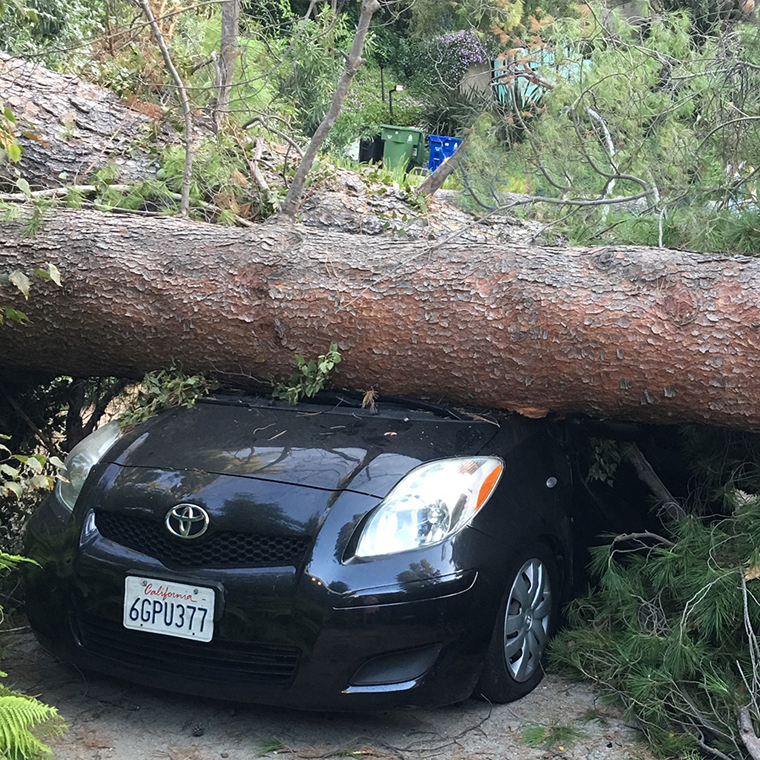 Our sons car completely smashed by a pine tree that fell down.