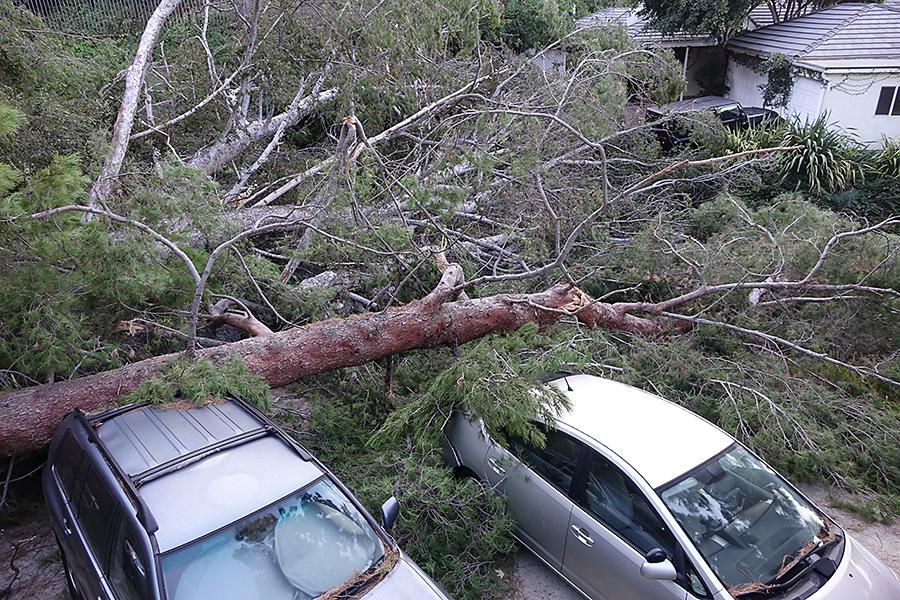 Treemaggen 3.jpg