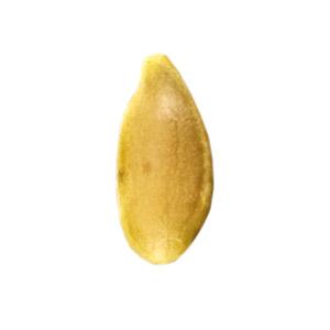 golden_flax_seed.jpg