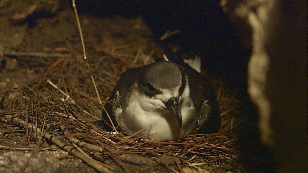 bird in nest on ground