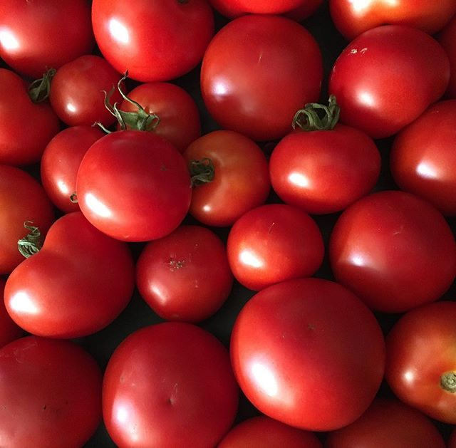 Our 🍅 the epitome of summer! #goodfoodforhudson #summerharvest #juicyred
