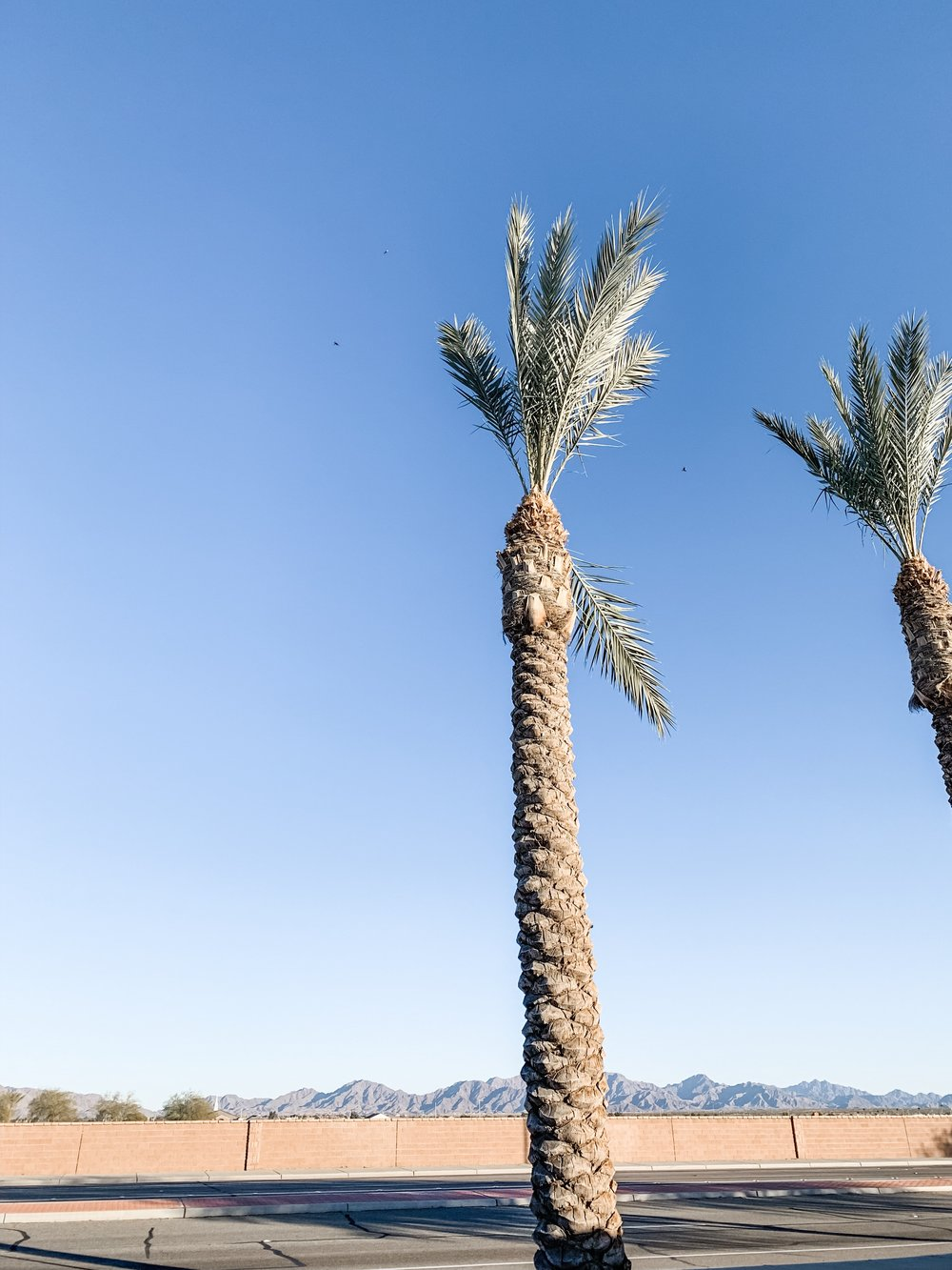 Love those beautiful palm trees in Arizona.