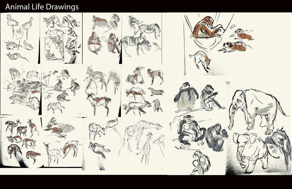 animaldrawings.jpg