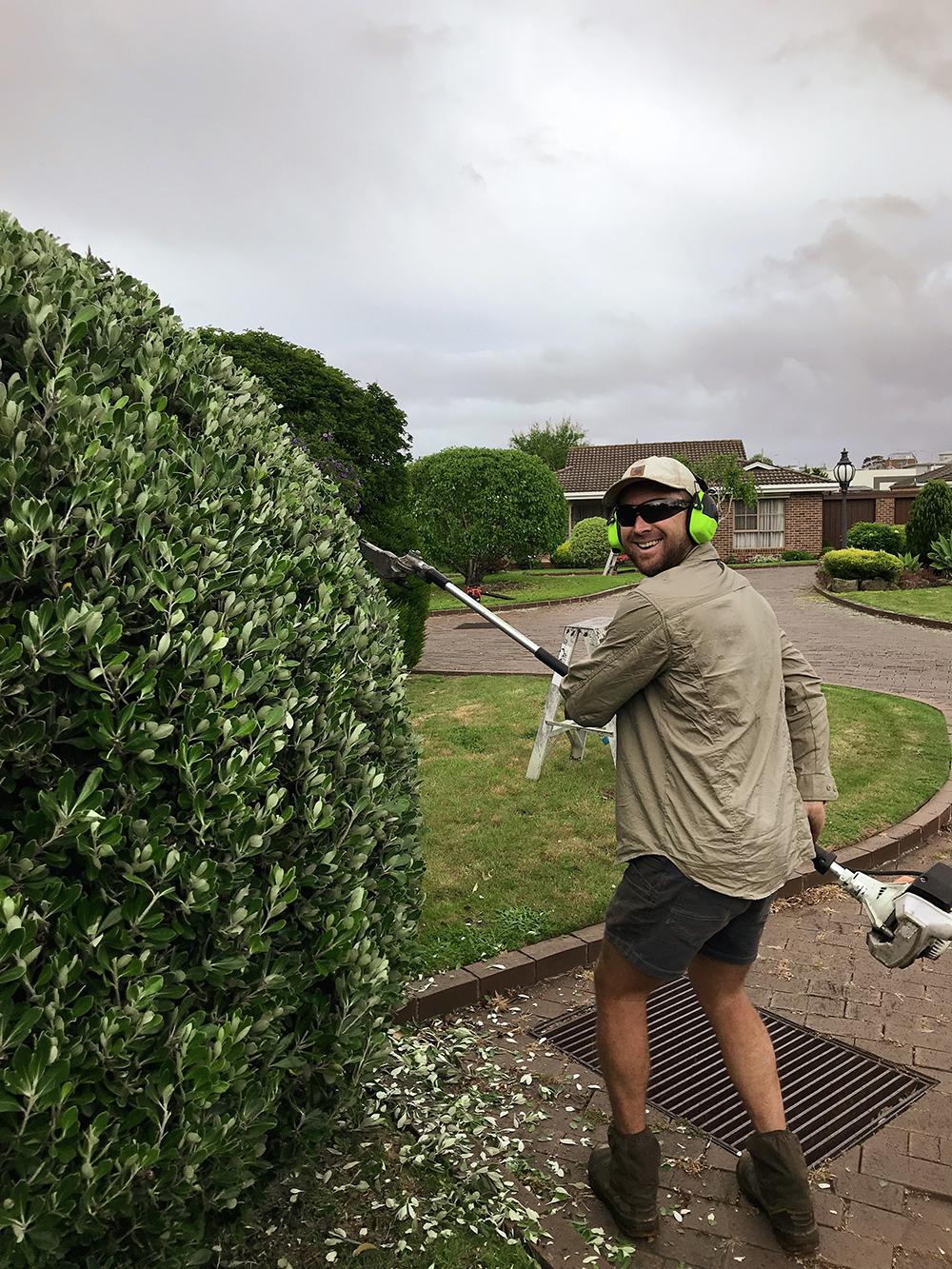 bggardenworks hedget trimming1.jpg