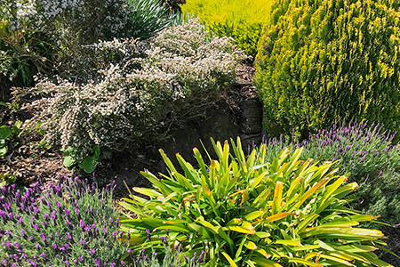 HEDGE CUTTING & PRUNING - Request a quote   Learn more
