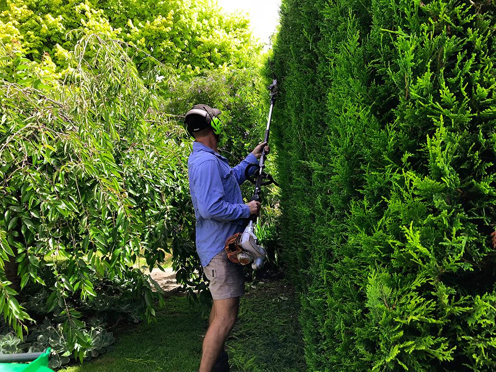 Hedge Cutting Gardening.jpg