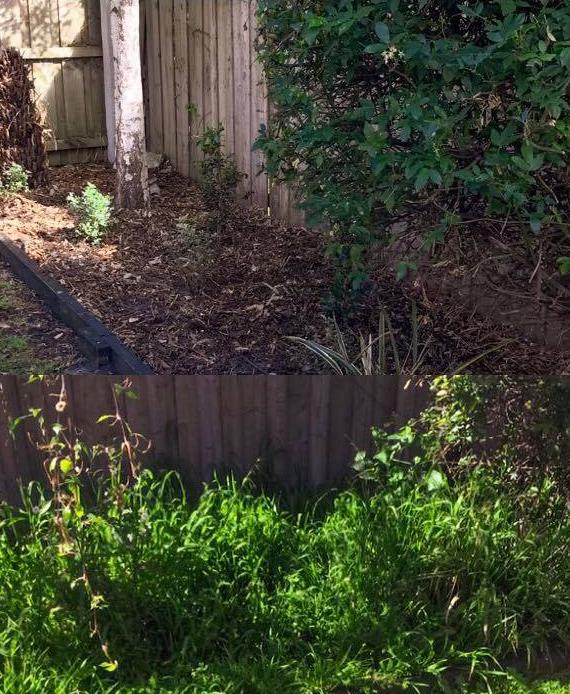 Weeding Gardening 3.jpg