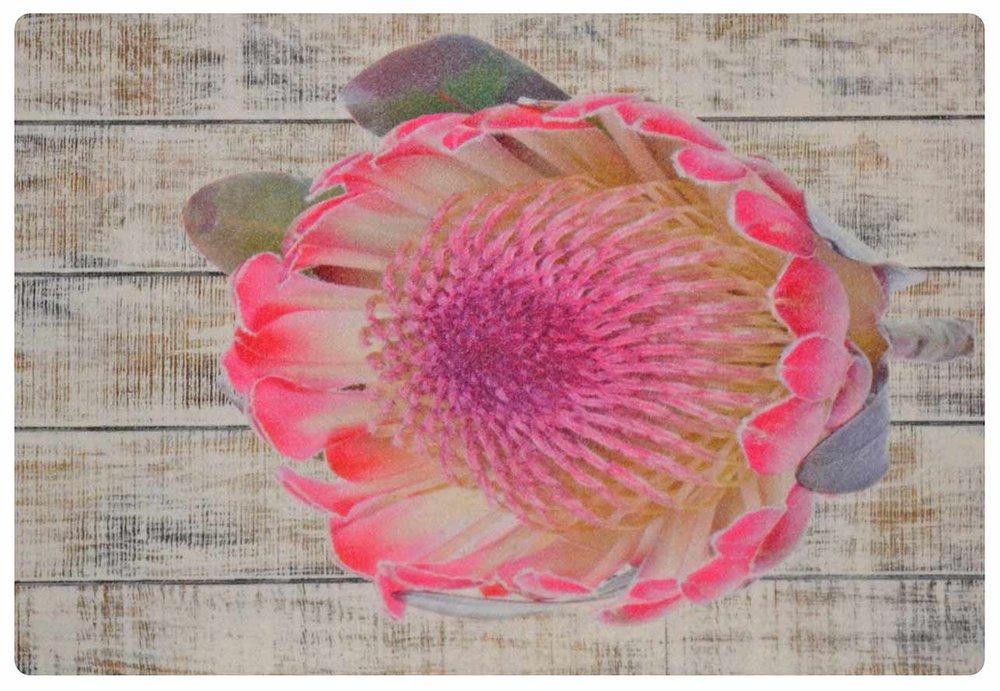 Light Pink Protea