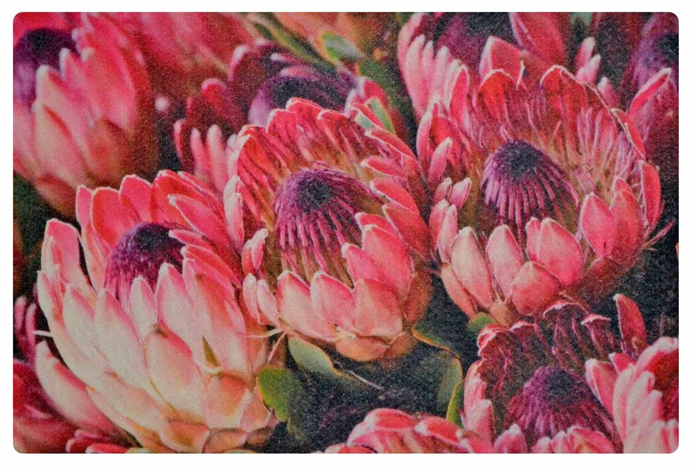 Popular Pink Protea Bunch