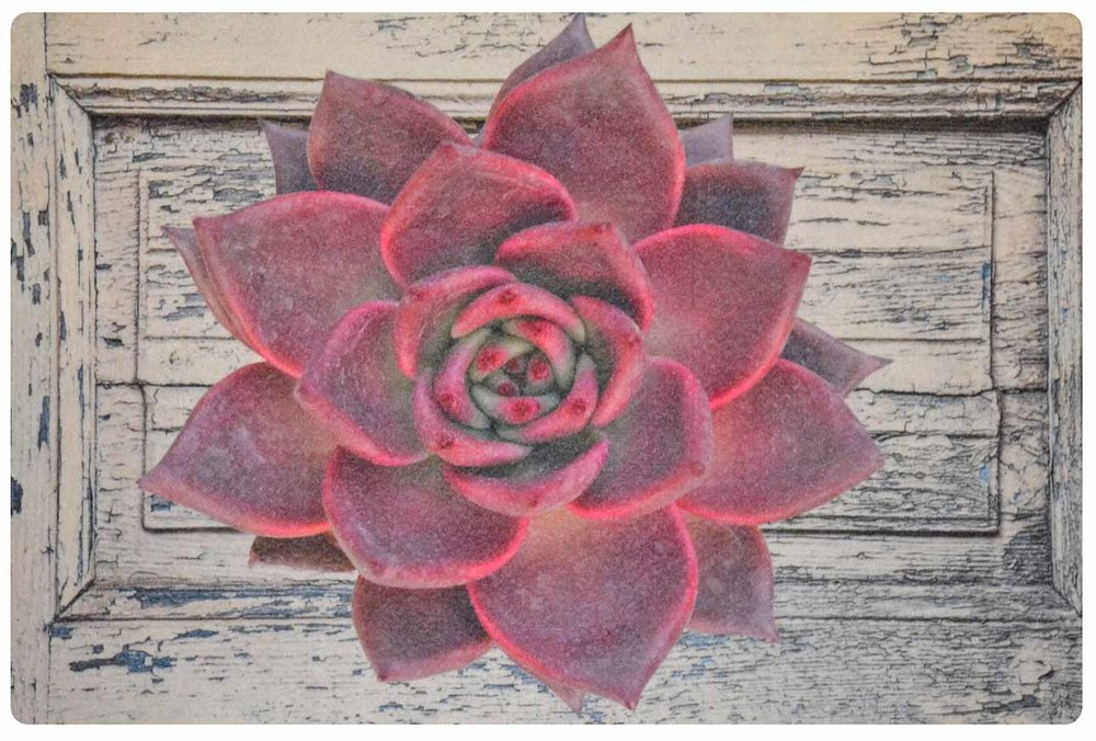 Red Desert Rose