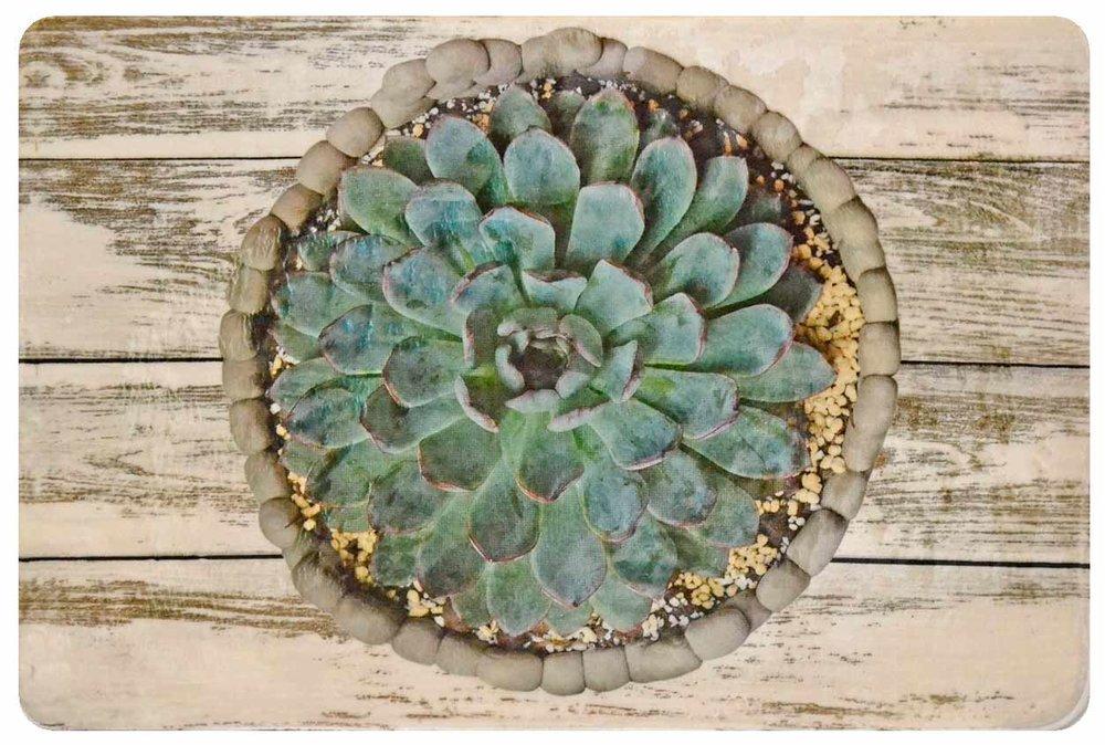 Desert Rose on White Wood