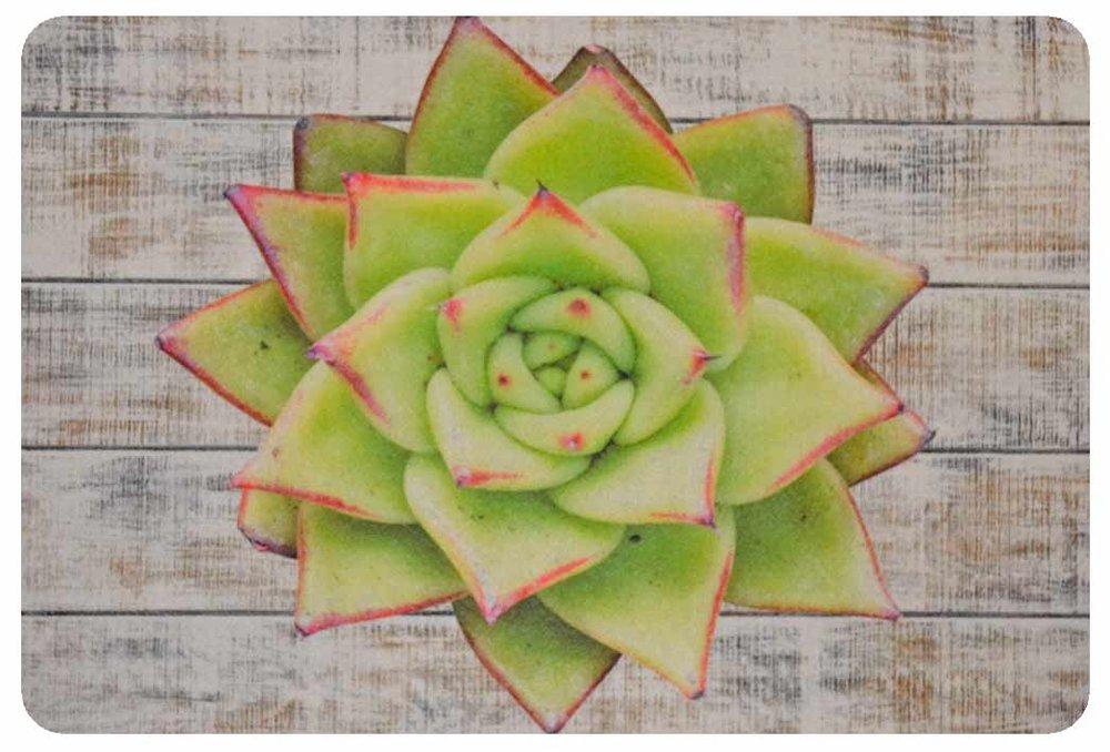 Light Green Desert Rose