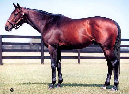 COLONY LIGHT THOROUGHBRED REFERENCE SIRE