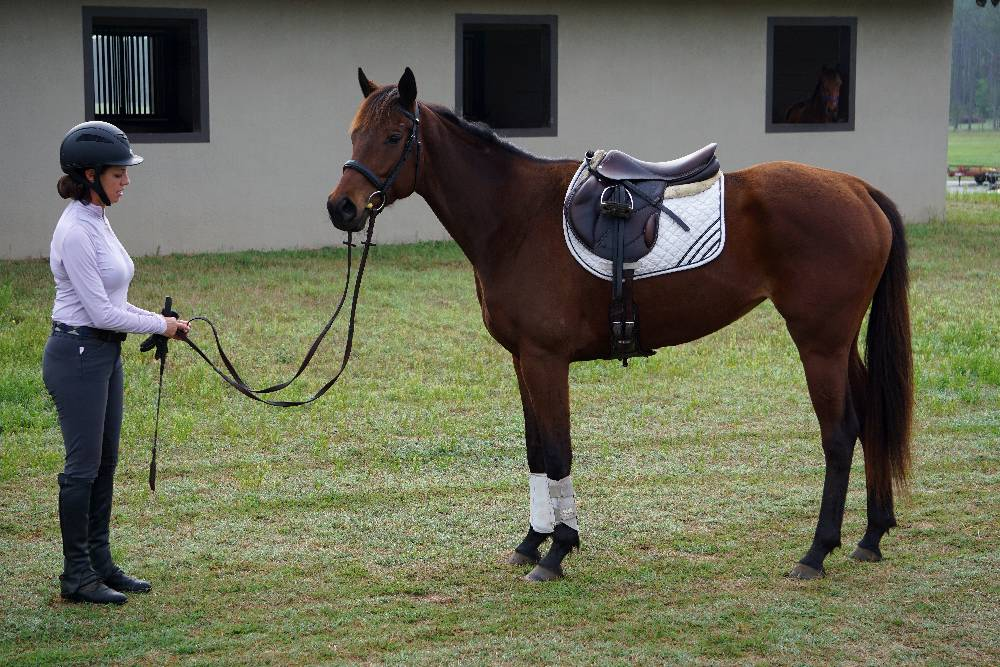 FOSTERING GREATNESS-2013 SPORTHORSE PROSPECT BY GREATNESS OUT OF PRO DIGGER BY POLISH PRO