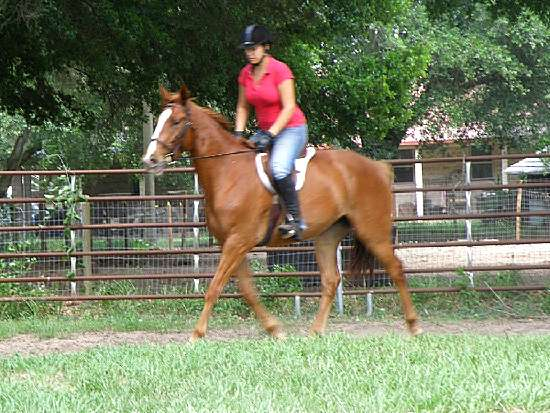 BARRING THE STORM-THOROUGHBRED SPORT HORSE