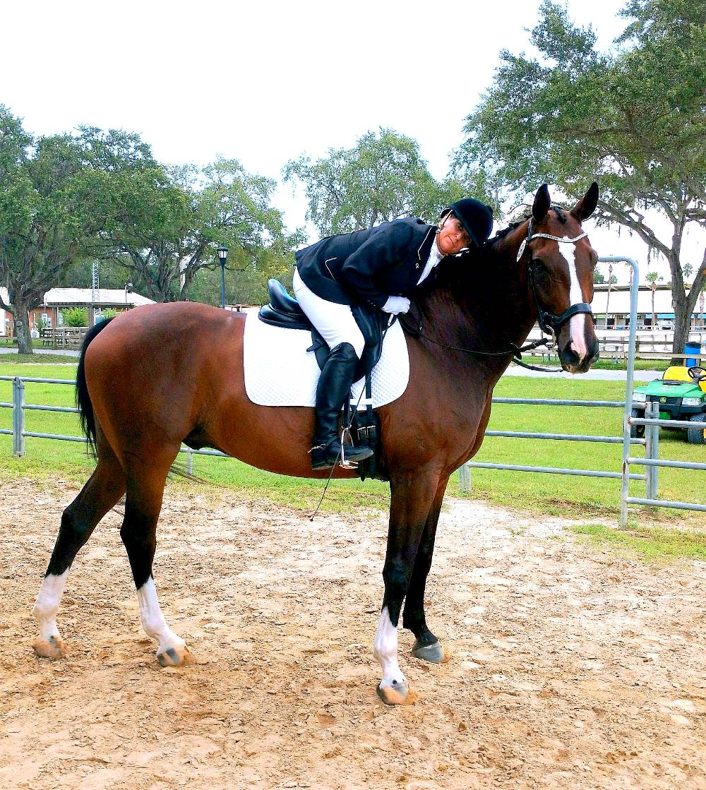 Drew Love—Formerly DICEMAN - HANOVERIAN DRESSAGE HORSE BY DONNERSOHN OUT OF EM DIAMONETTE BY DEDERICK