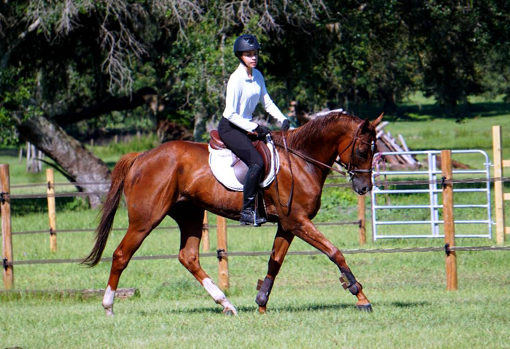 RED ROYAL RULER-THOROUGHBRED SPORTHORSE BY WESTERN PRIDE OUT OF HIGH ROYAL HONOR