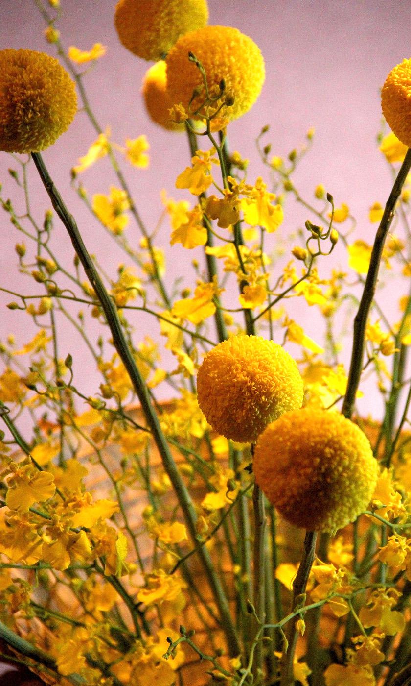 Dianthus-Flowers-Gallery-Main-1902-4.jpg