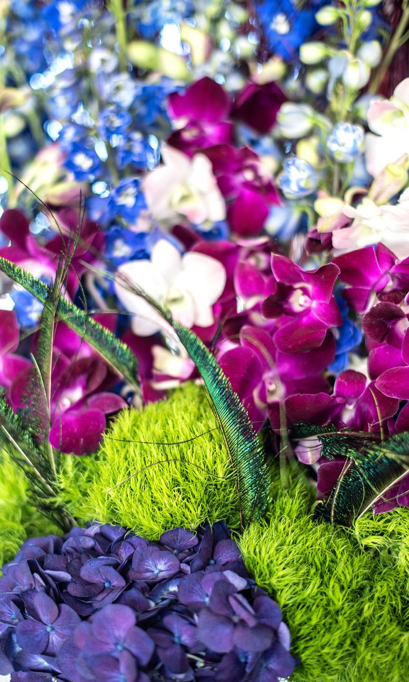 Dianthus-Flowers-Gallery-Main-1902-5.jpg