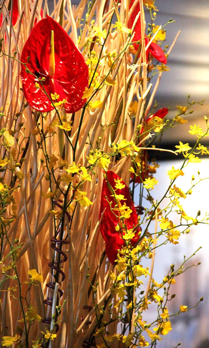 Dianthus-Flowers-Gallery-Main-1902-6.jpg