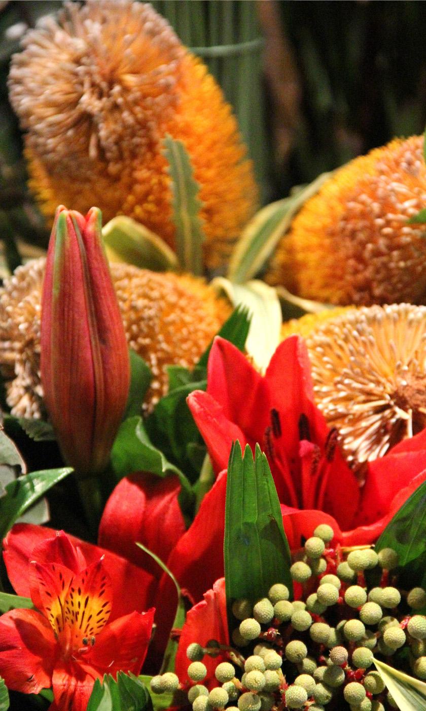 Dianthus-Flowers-Gallery-Main-1902-8.jpg