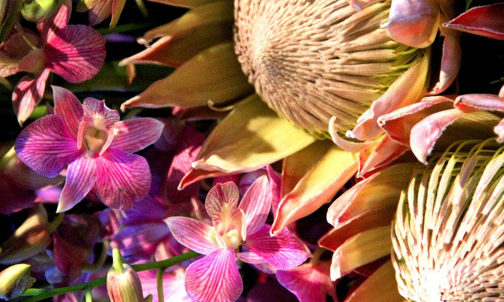 Dianthus-Flowers-Gallery-Main-1902-15.jpg