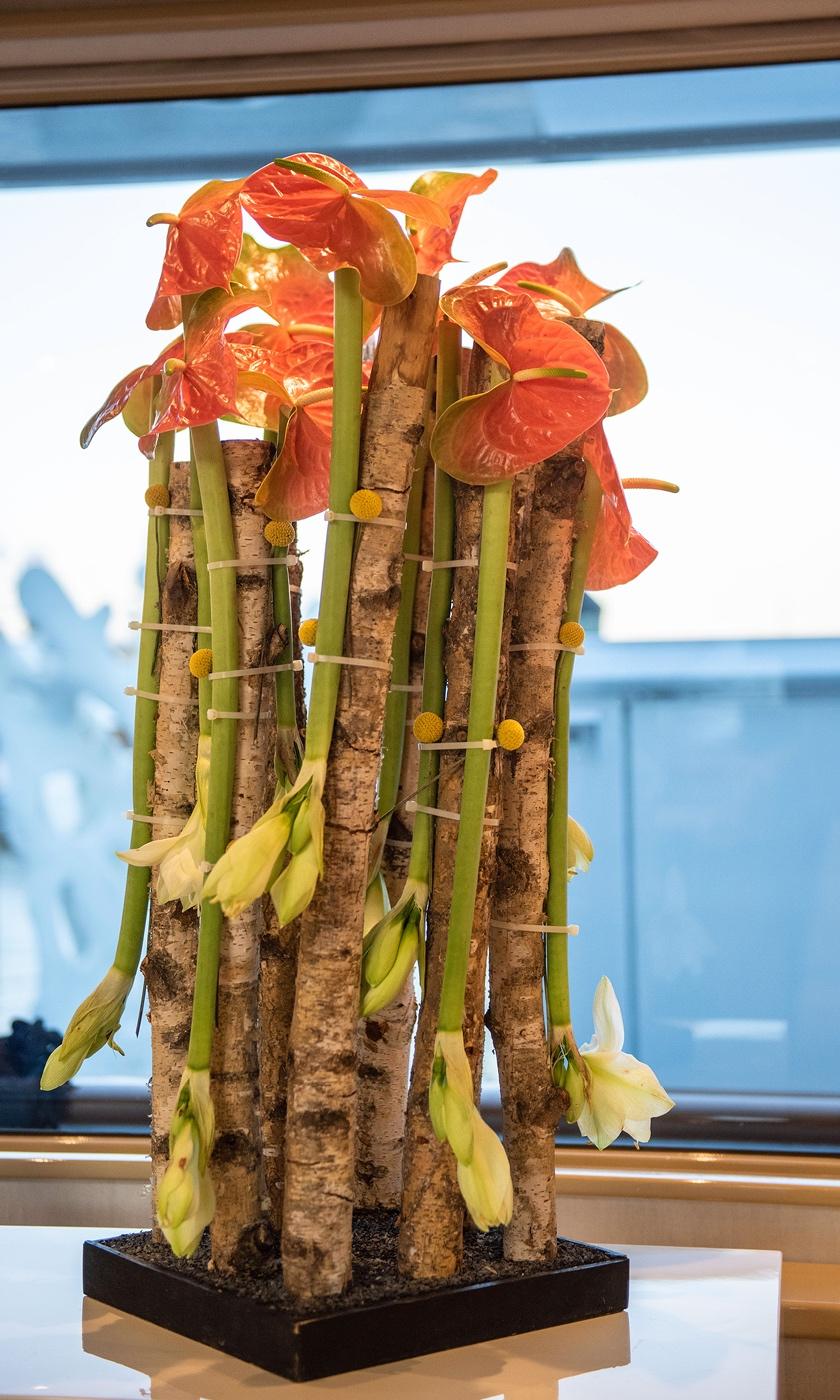 Dianthus-Flowers-Gallery-Yachts-1902-29.jpg