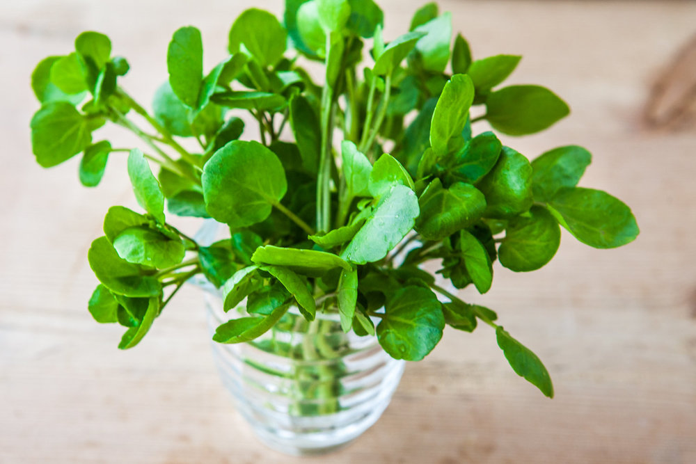 Did you know that watercress can help prevent DNA damage caused by the sun, our lifestyles and aging?