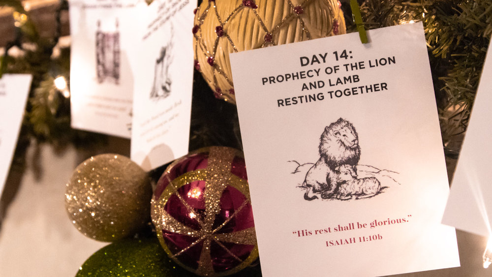 Day 14   Prophecy of the Lion and the Lamb Resting Together
