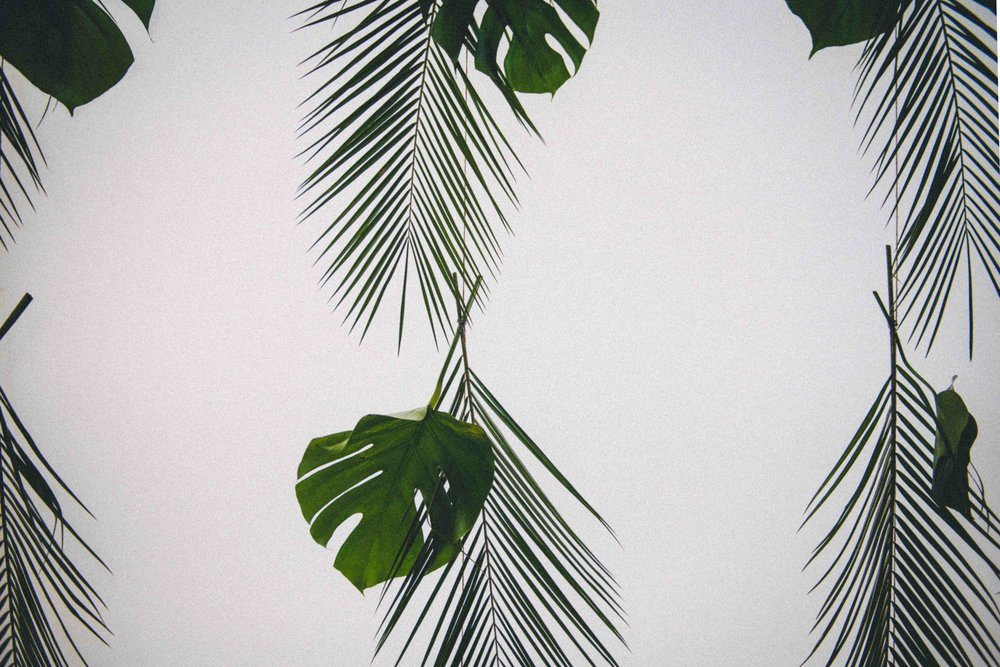 Palm curtain compressed.jpg