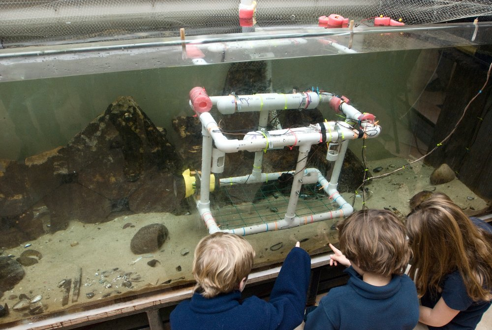 Ross Lower School students examining marine life in an a large tank