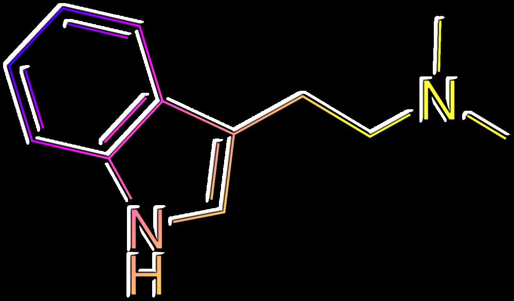 DMT - N, N-Dimethyltryptamine, Mimosa, Acacia, Psychotria, Delosperma, Anadenanthera, Desmodium, Petalostylis. . .