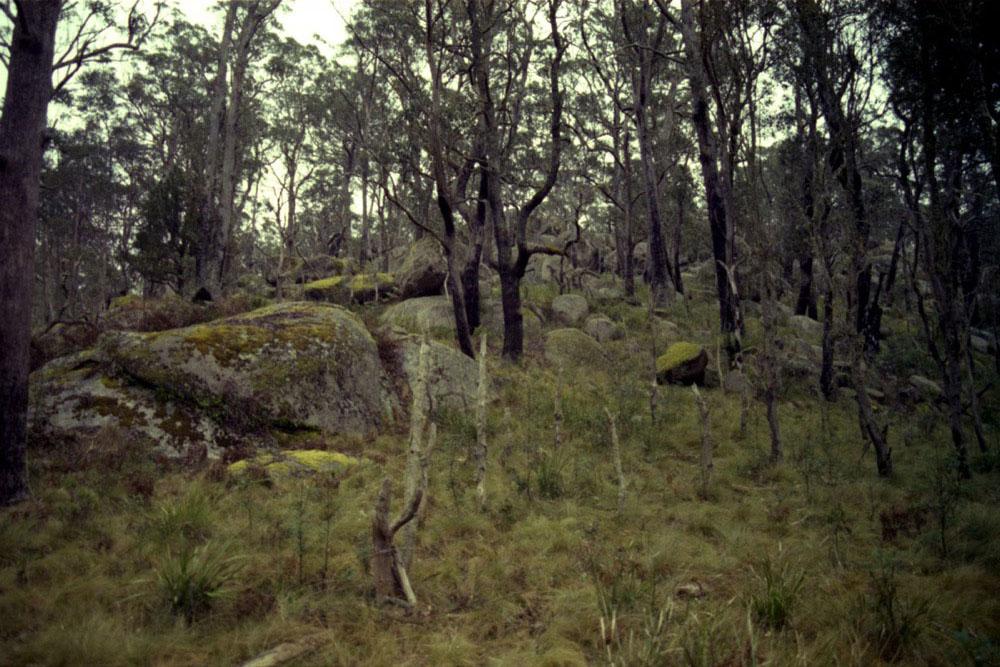 NSW Roadtrip_024.jpg