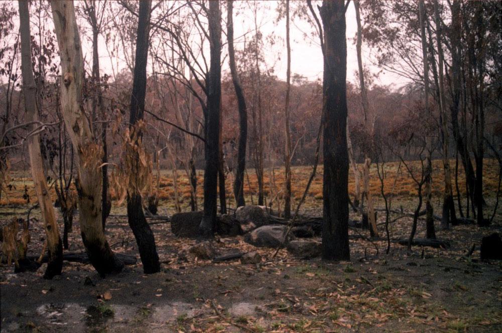 NSW Roadtrip_041.jpg