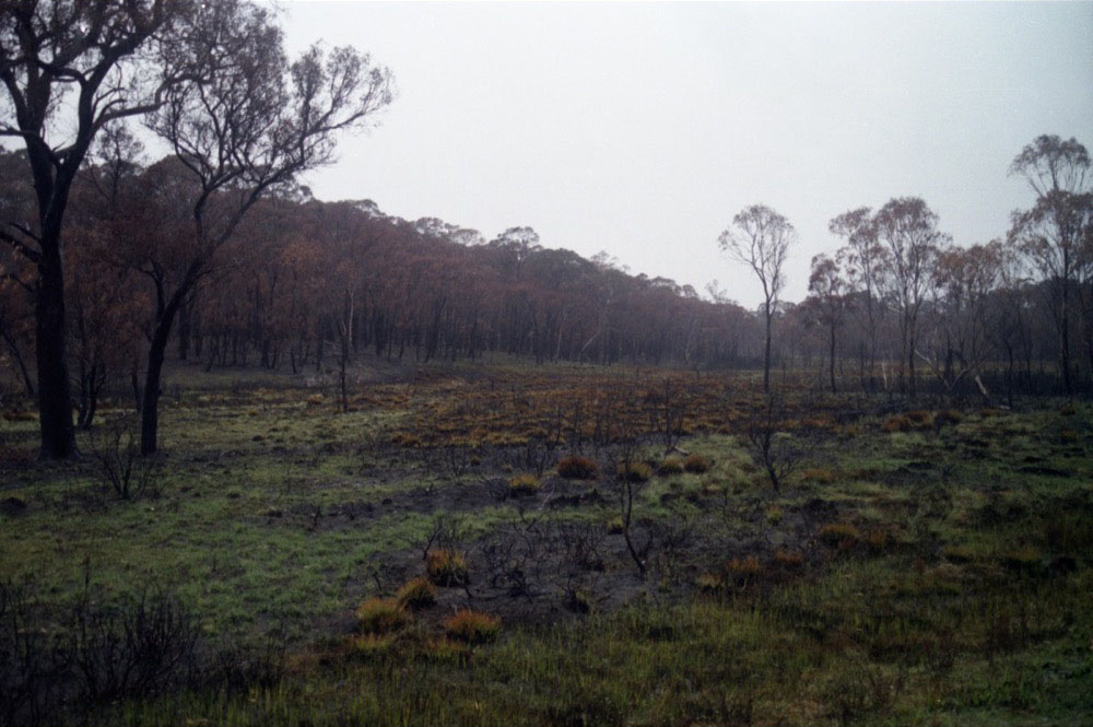 NSW Roadtrip_042.jpg