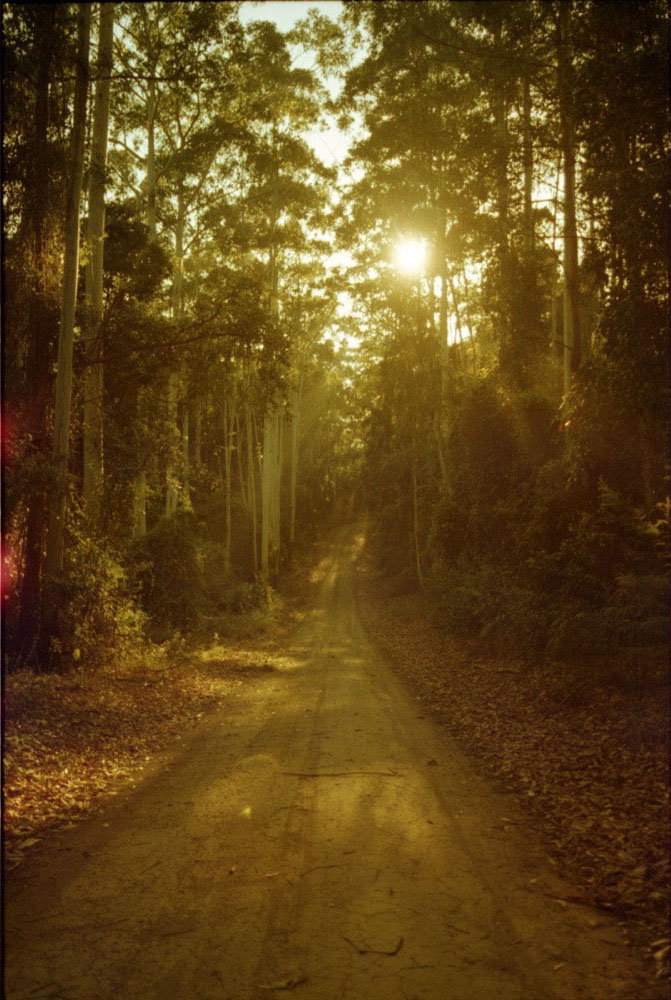 NSW Roadtrip_057.jpg