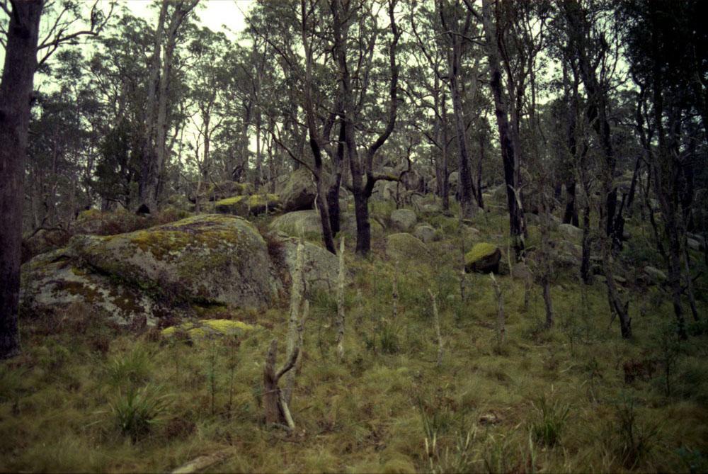 NSW-Roadtrip_021.jpg