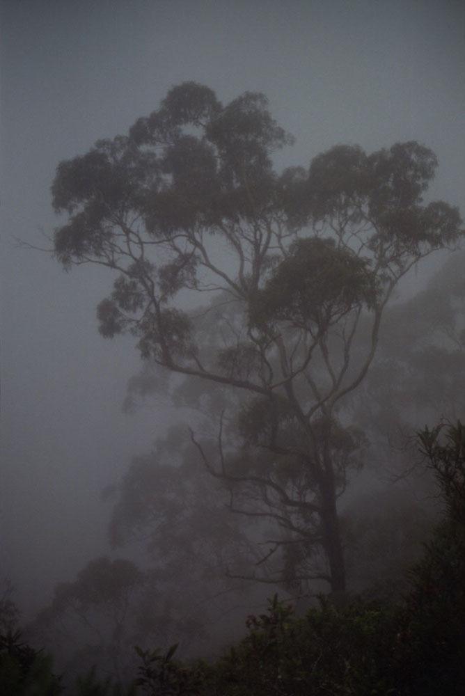 NSW-Roadtrip_024.jpg