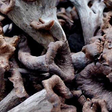 Wine Forest Mushrooms - WineForest.com