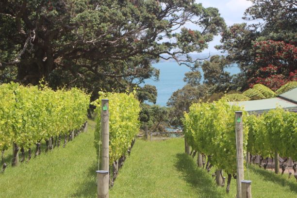 Kennedy Point Winery overlooking Kennedy Bay on Waiheke Island