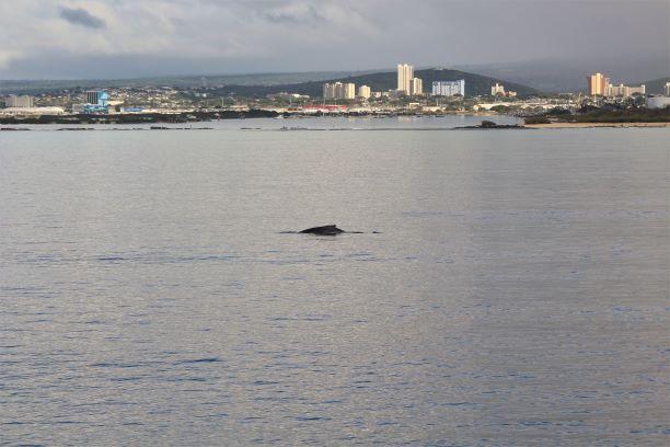 Honolulu whale watching 1.JPG